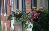 A flowerbed attached to a brick building in Media, PA